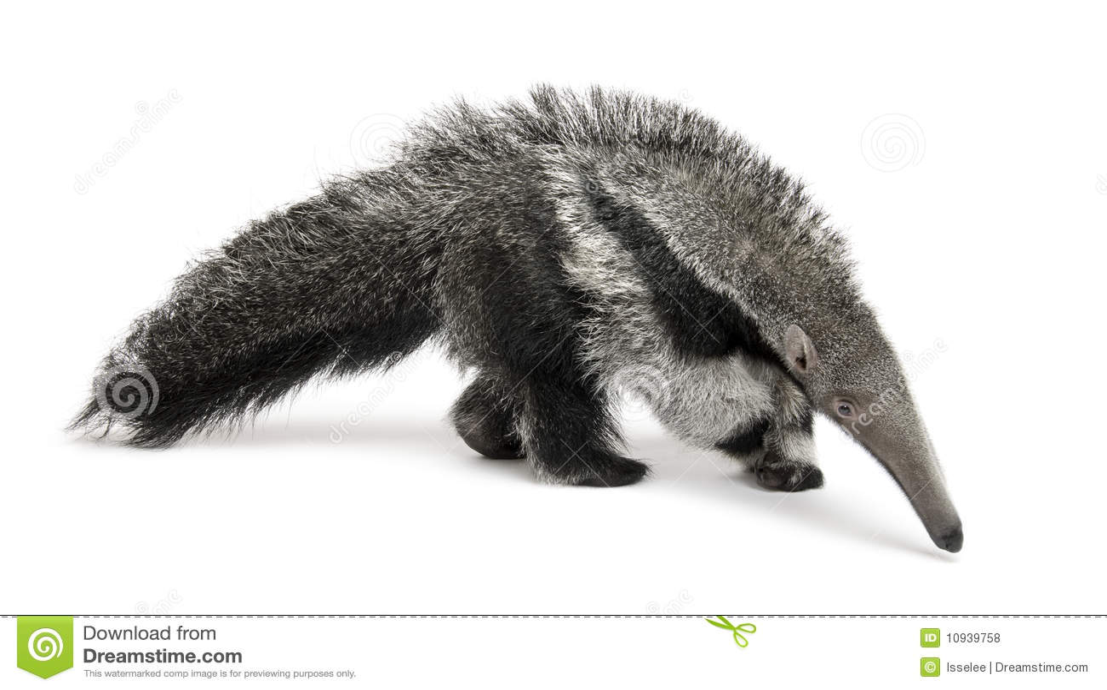 против детенышей предпосылки anteater гигантских белых