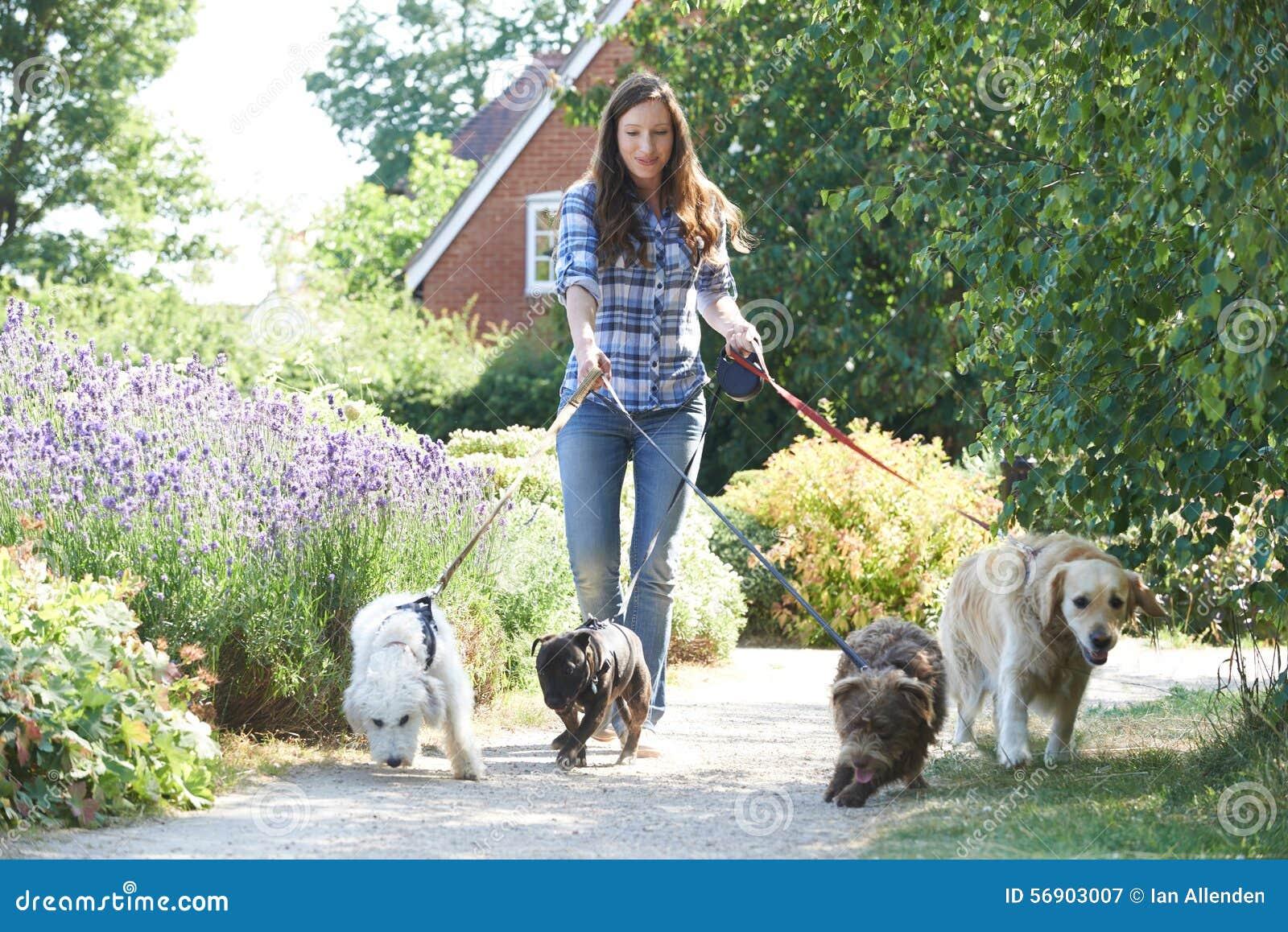 Профессиональный ходок собаки работая собак в парке