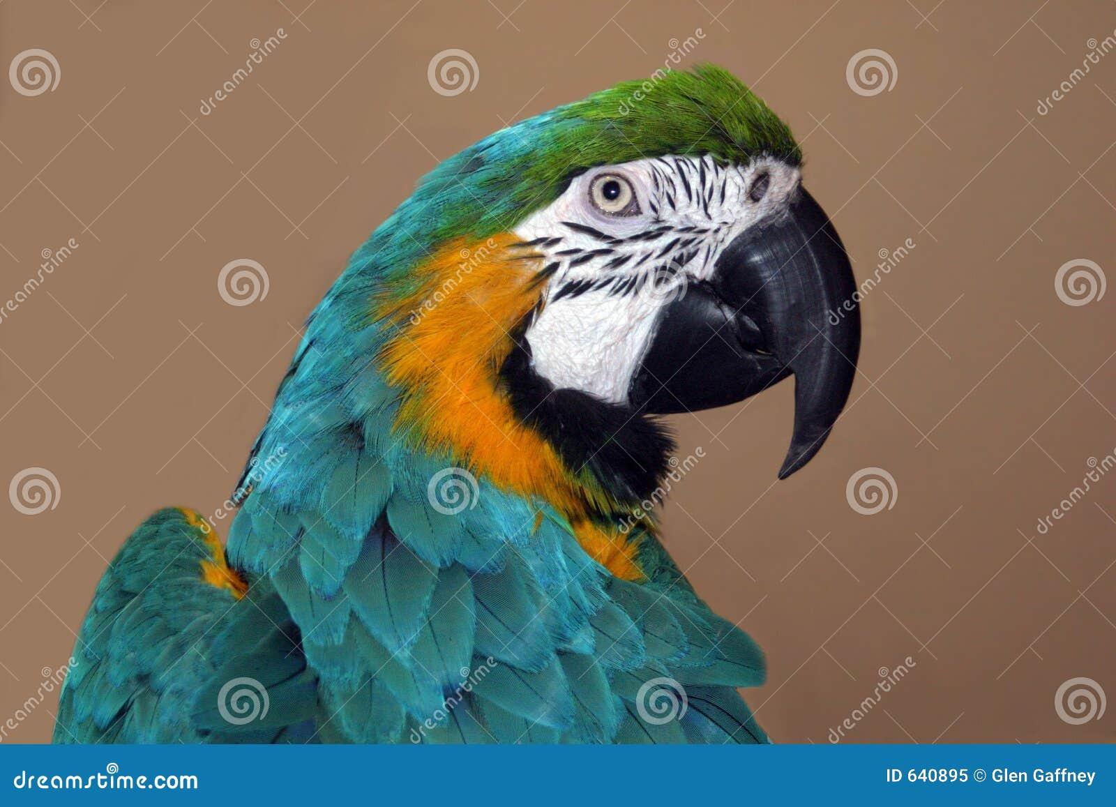 Download профиль попыгая стоковое изображение. изображение насчитывающей macaw - 640895
