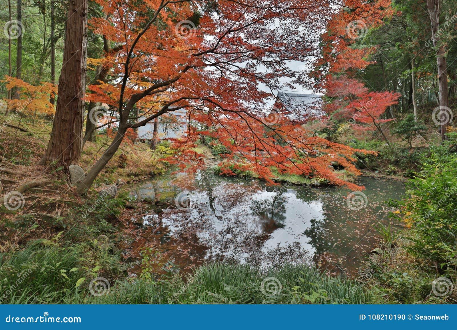 пруд и сад в виске Konkai Komyoji