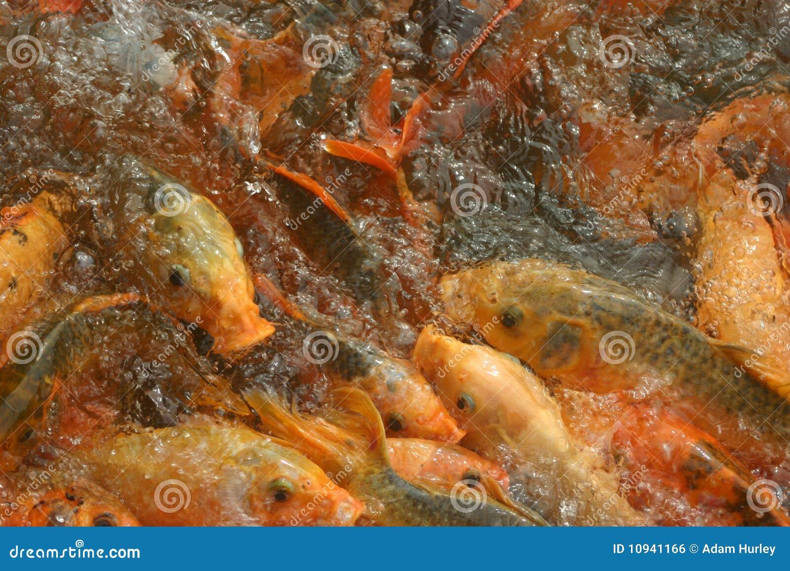 пруд рыб