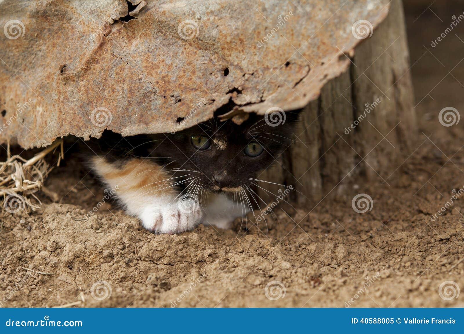 Прятать котенка