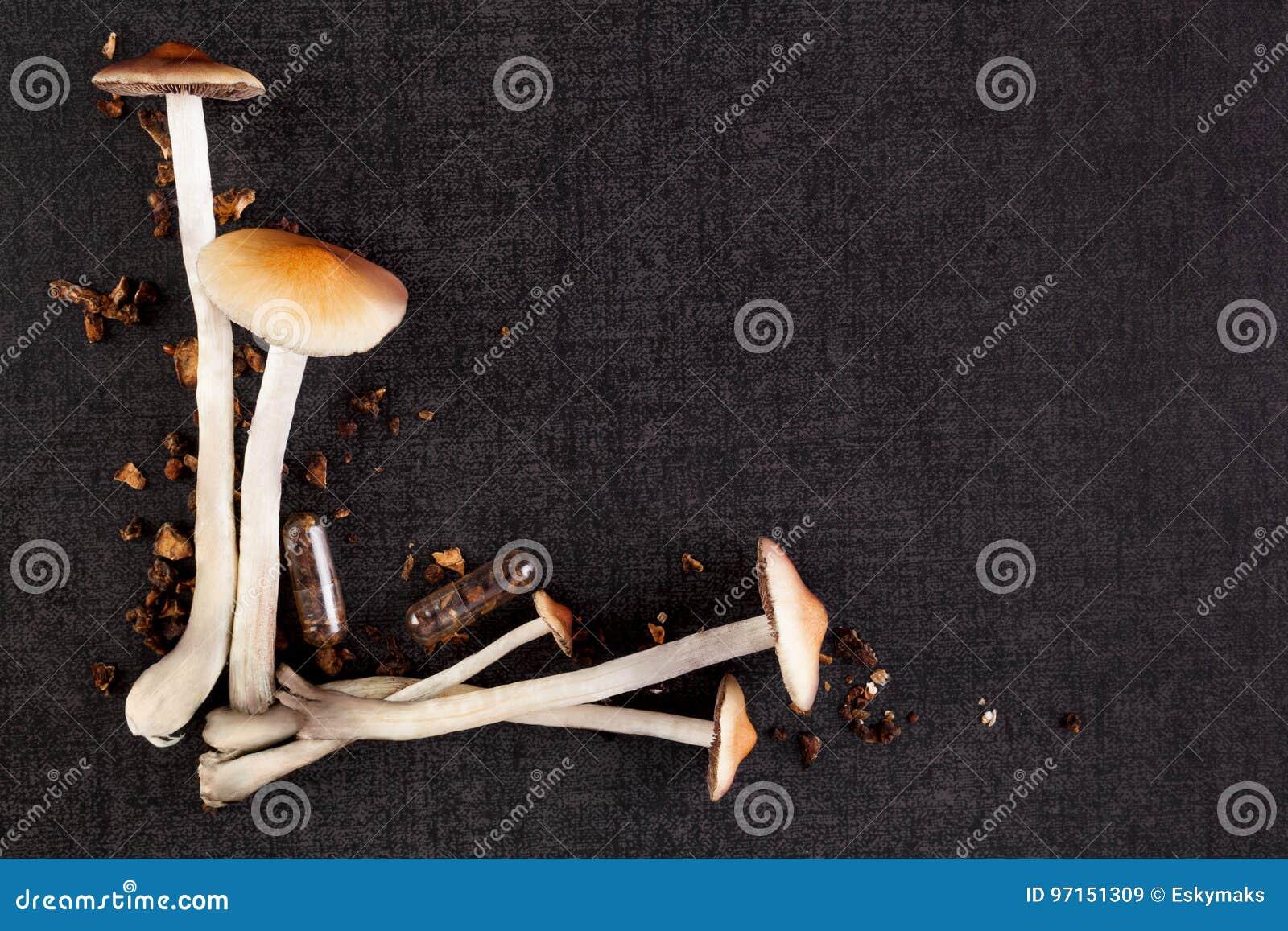 Психоделические грибы с космосом экземпляра