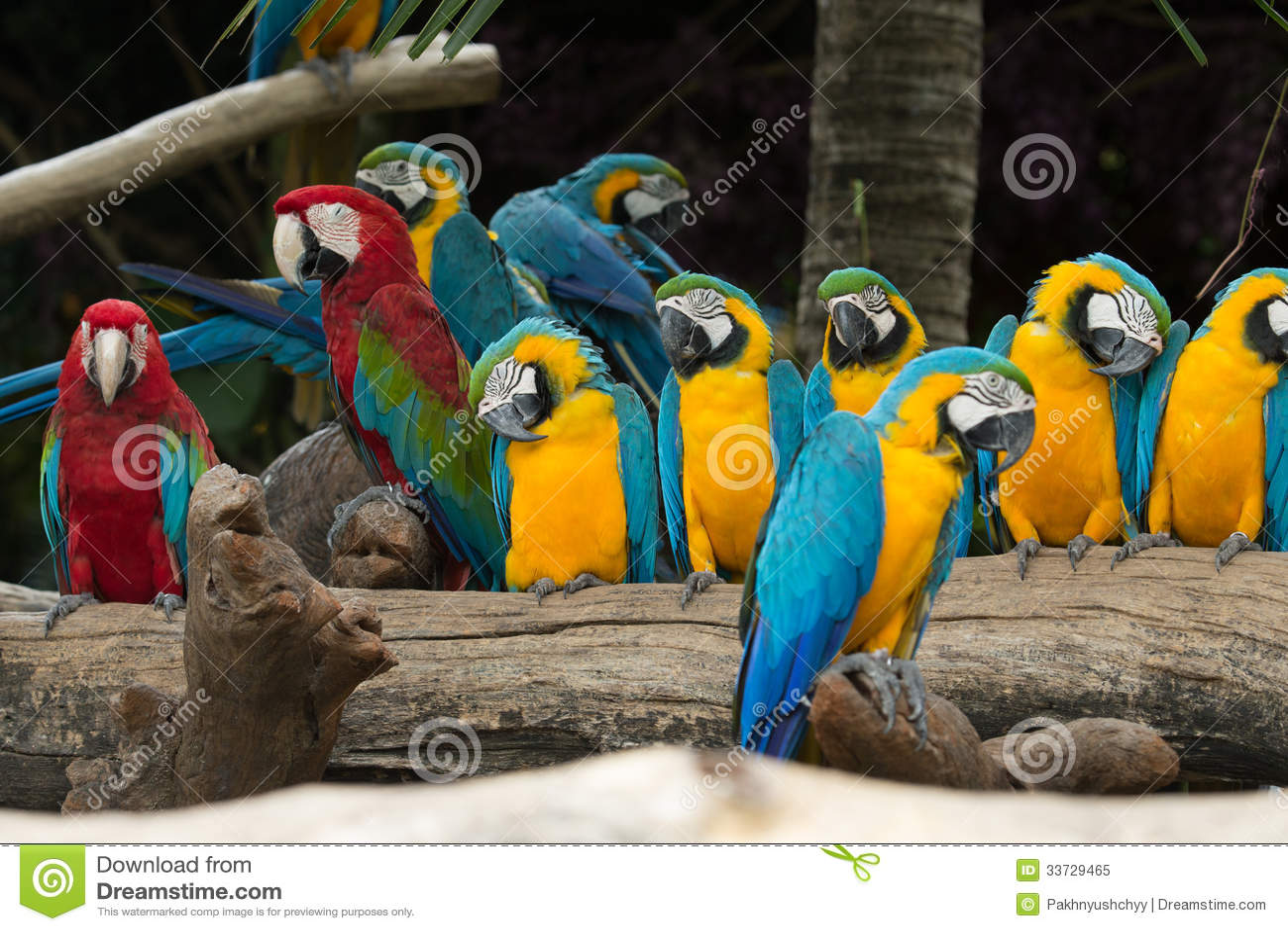 Птица ары