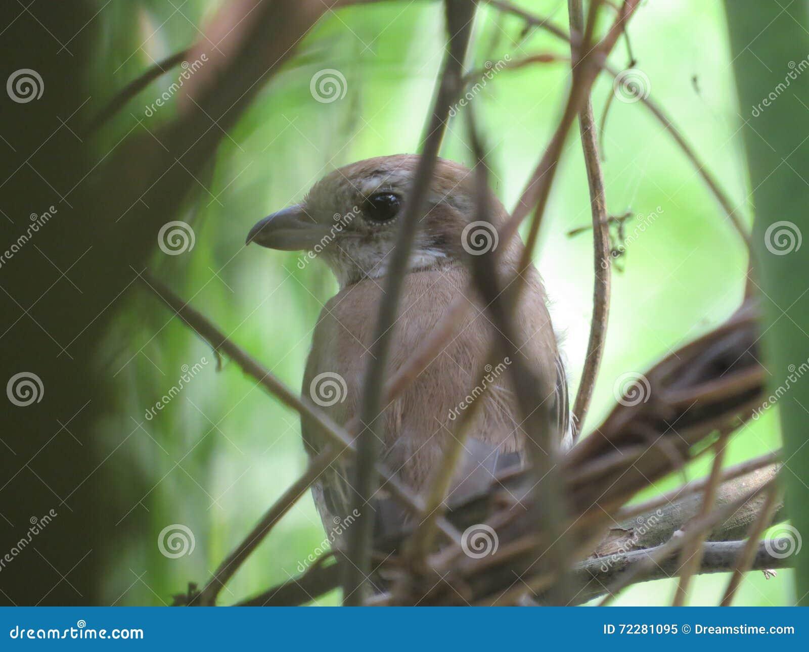Download Птица в кусте стоковое изображение. изображение насчитывающей биографической - 72281095