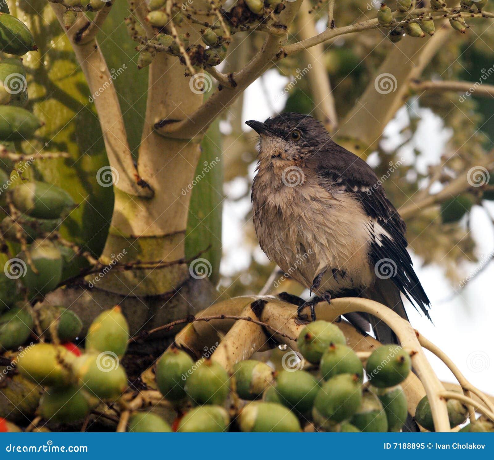 птица малая