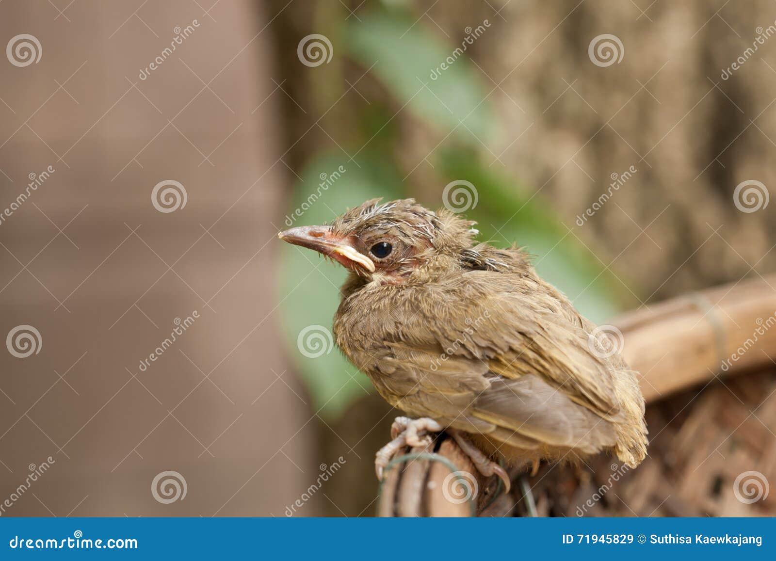 Птица младенца падает от дерева
