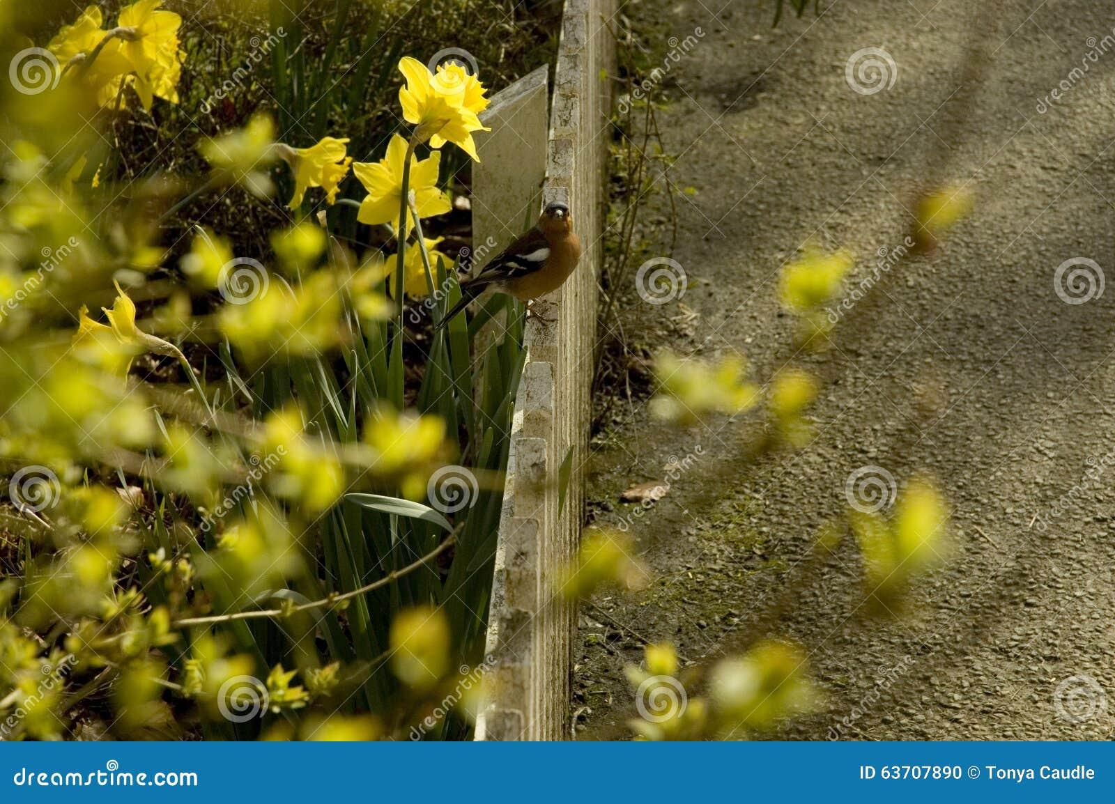 Птица на загородке