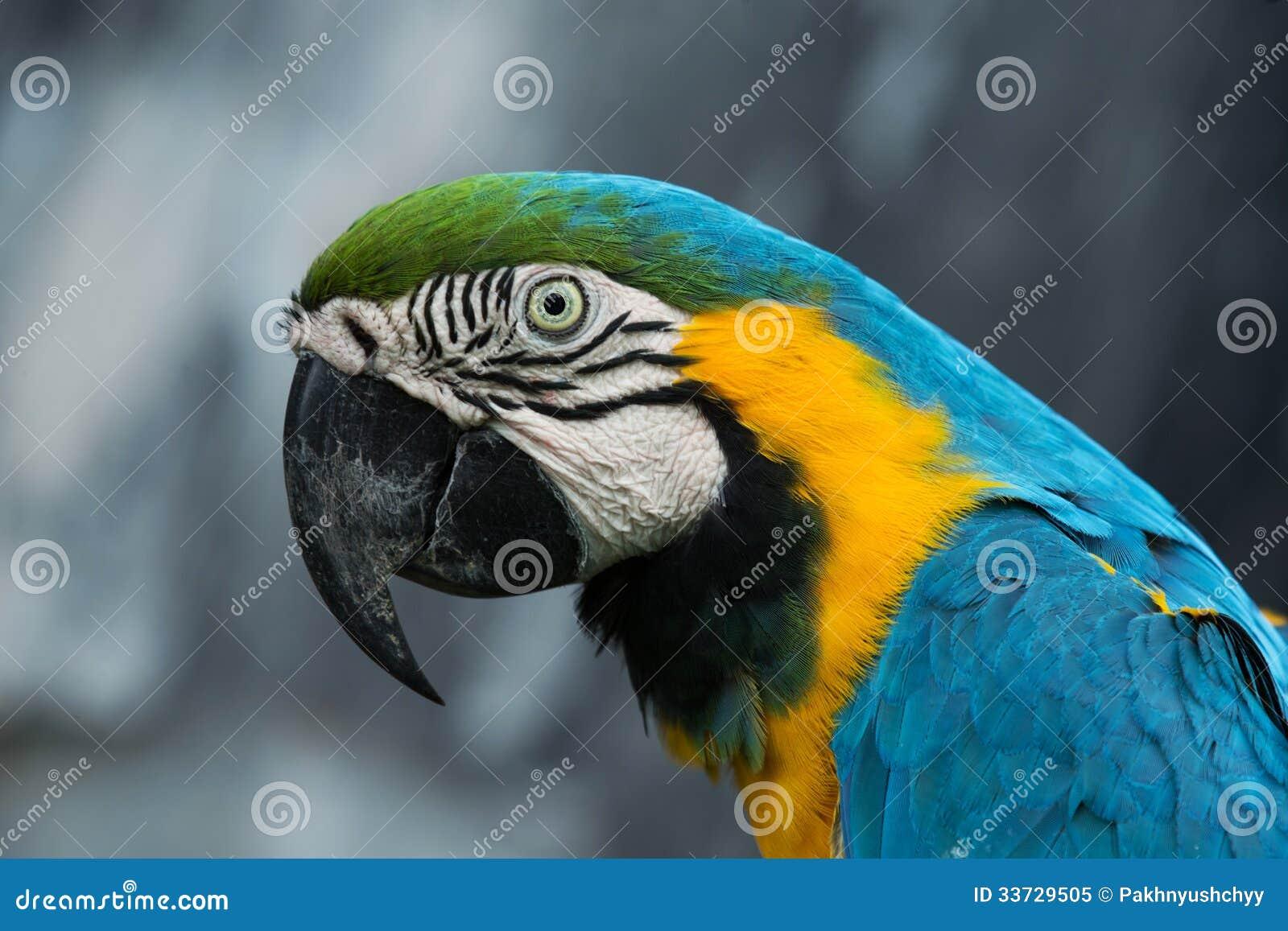 Птица попугая