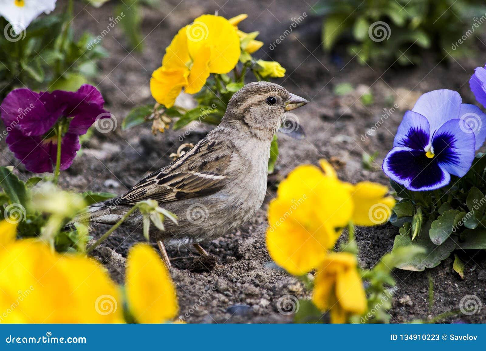 Птица среди желтого pansy