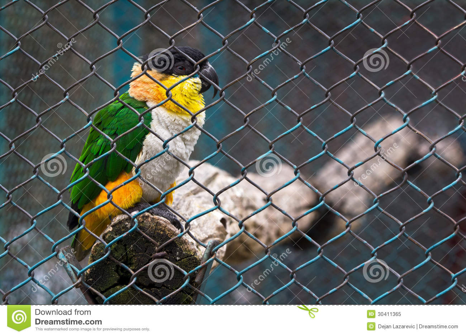 Птица тюрьмы