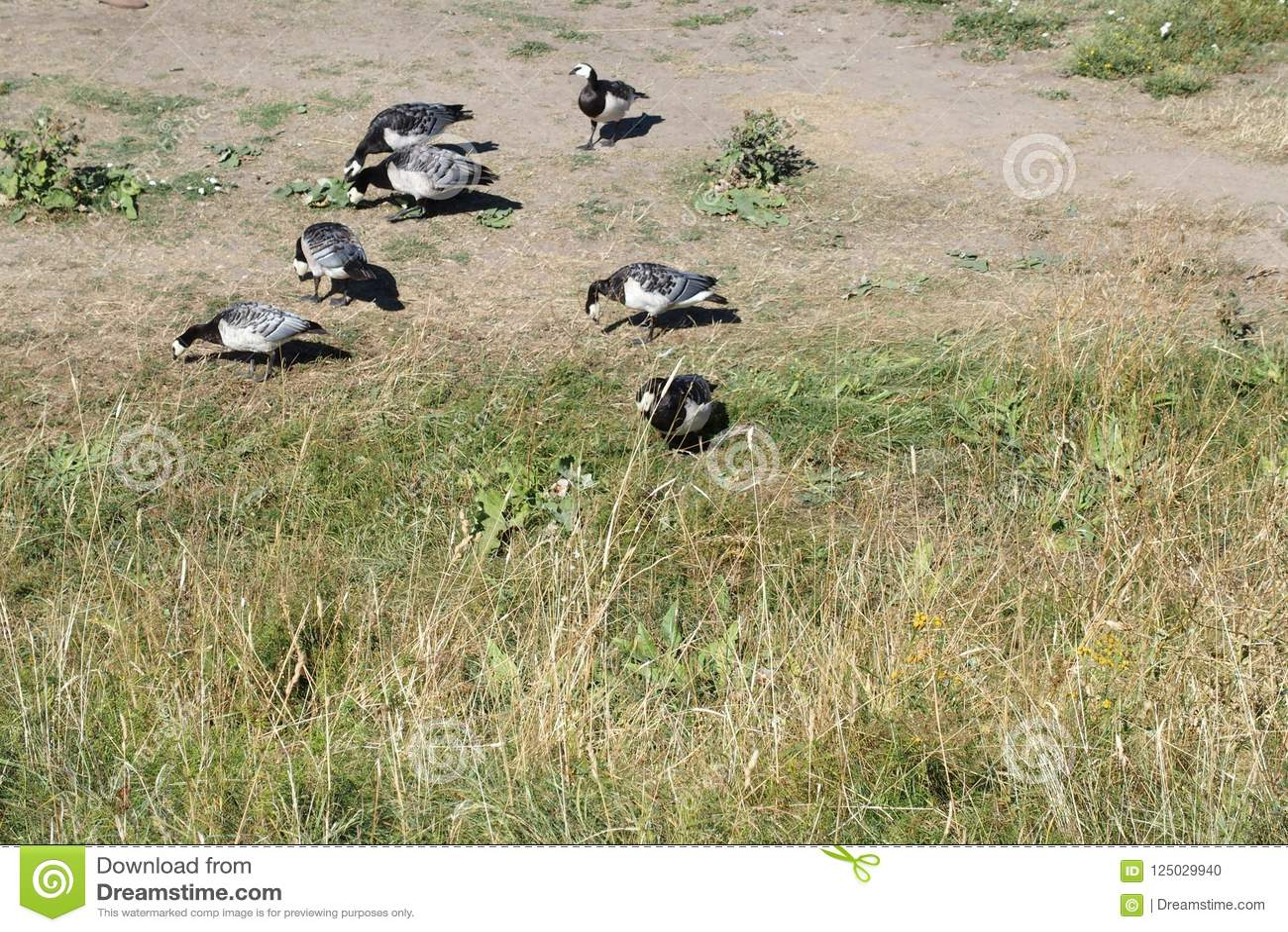 Птицы едят совместно в траве