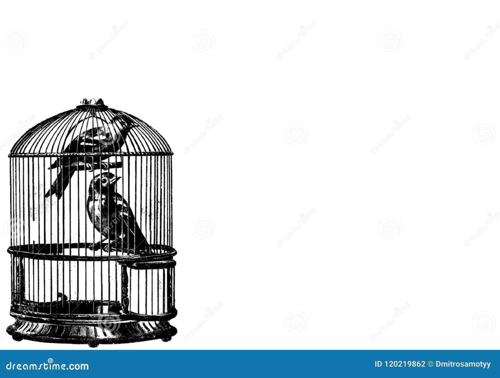 Птицы и собрание Birdcages клетка предпосылки птиц