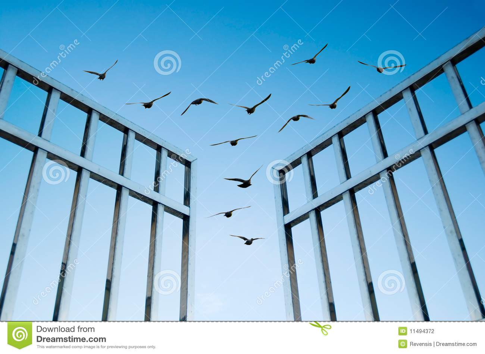 птицы летают излишек строба открытый