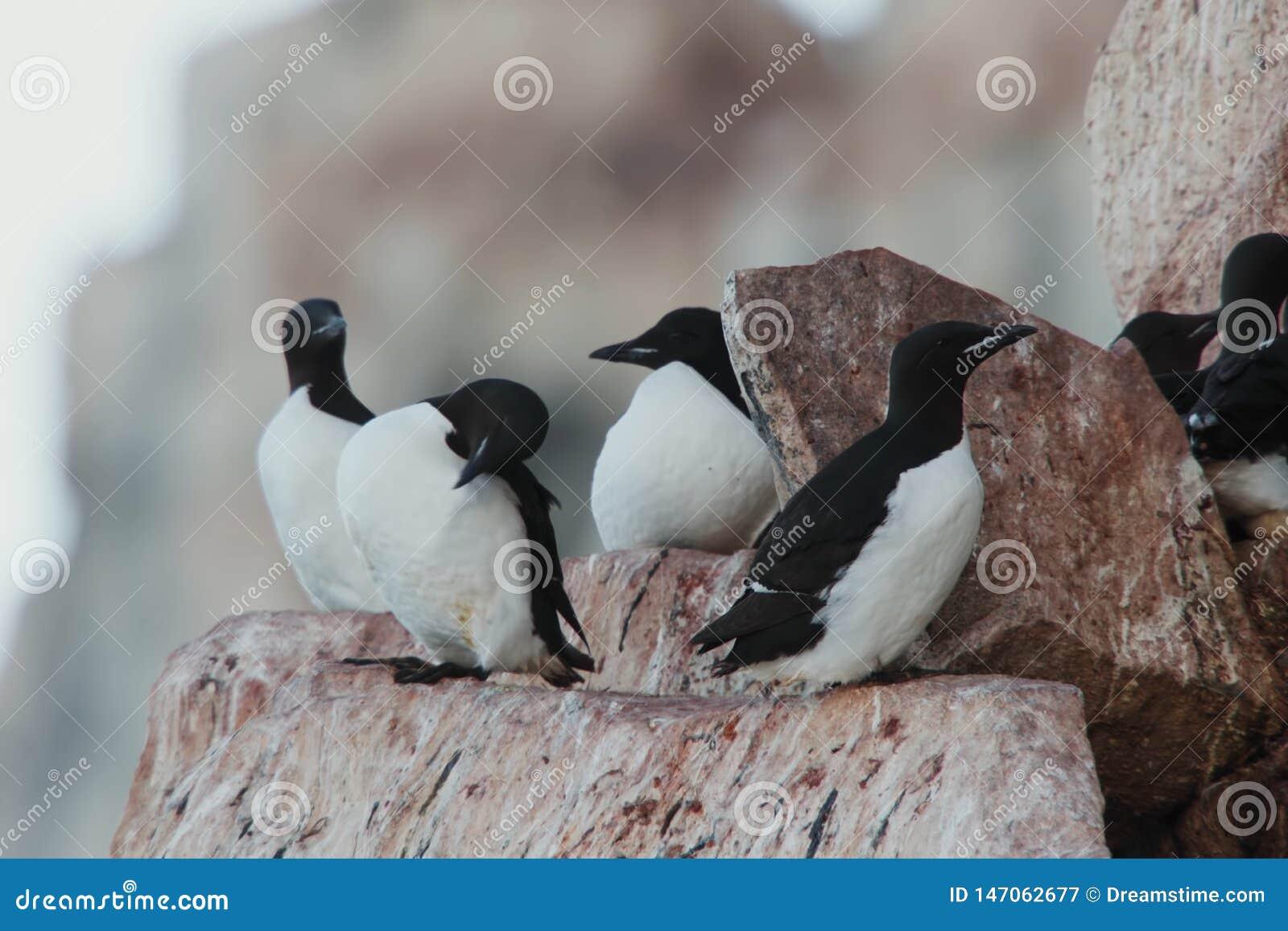 Птицы на природе горы