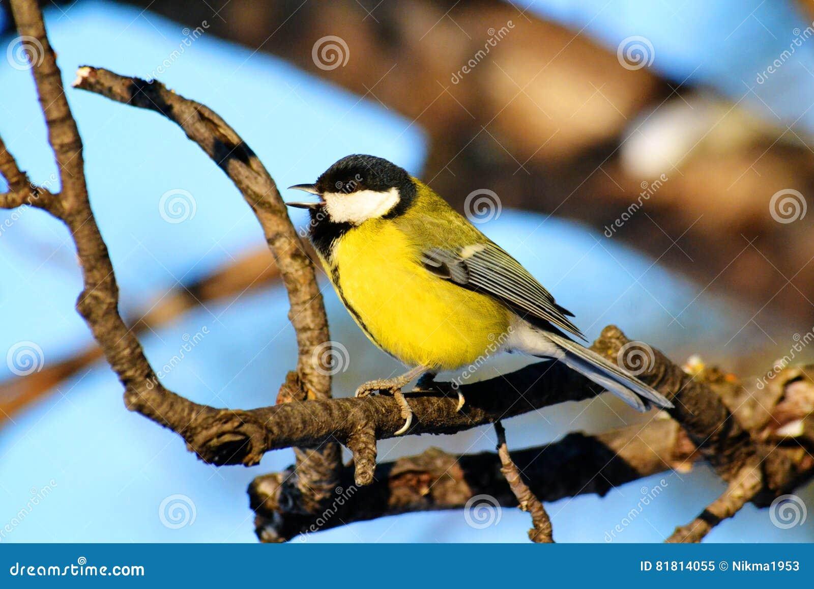 Птицы степей