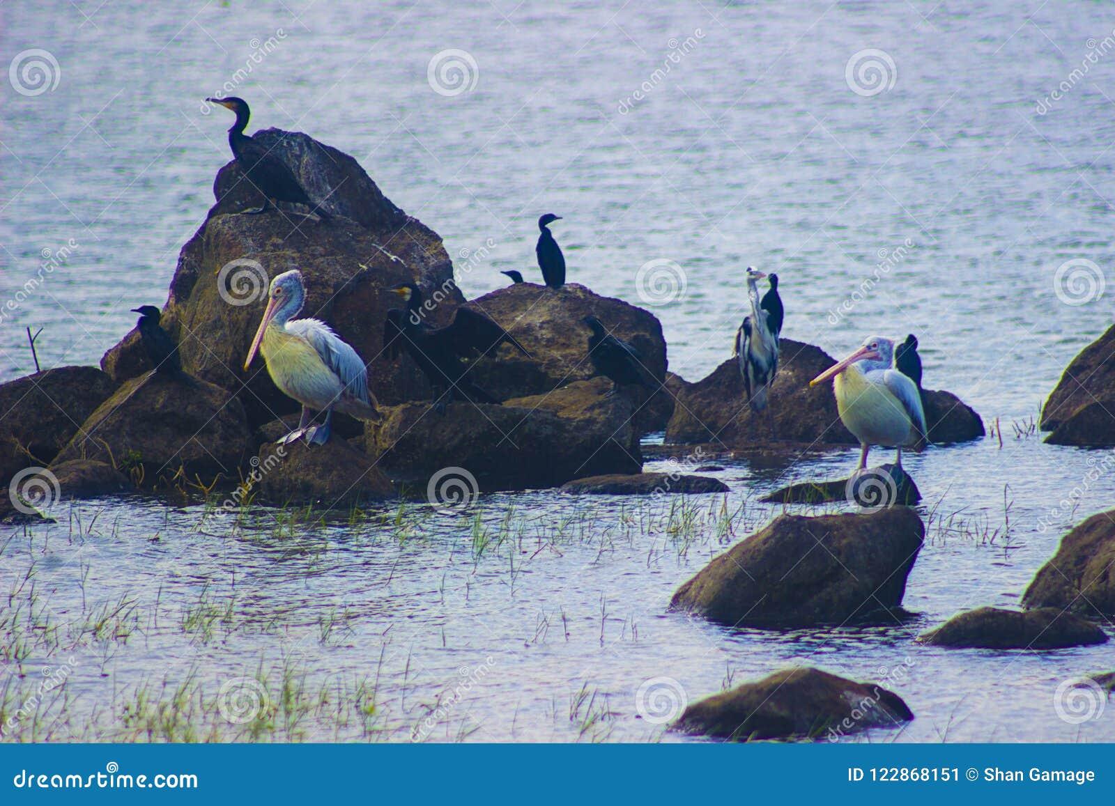Птичий заповедник Шри-Ланка Attidiya