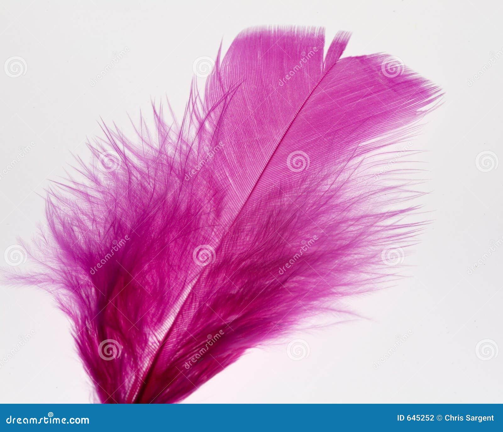 Download пурпур пера стоковое фото. изображение насчитывающей текстура - 645252