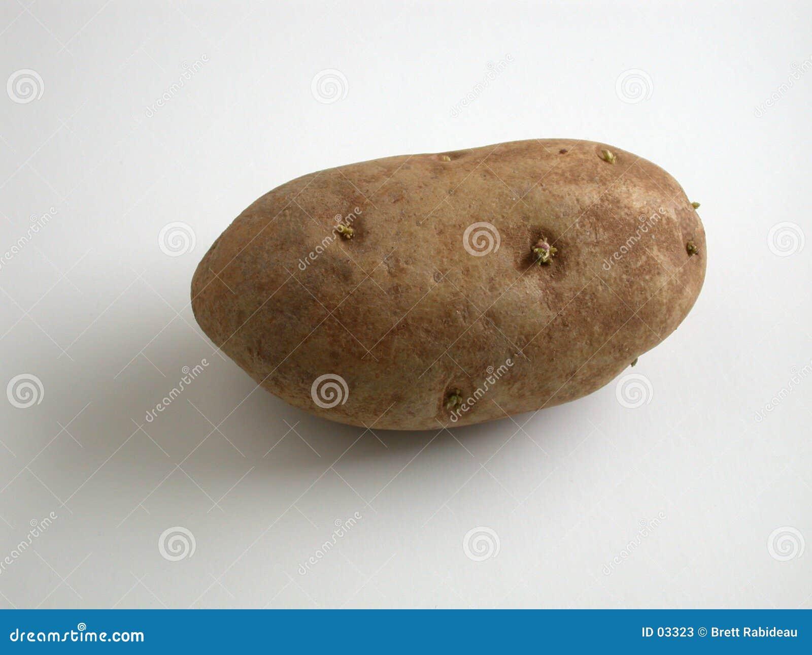 пускать ростии картошки