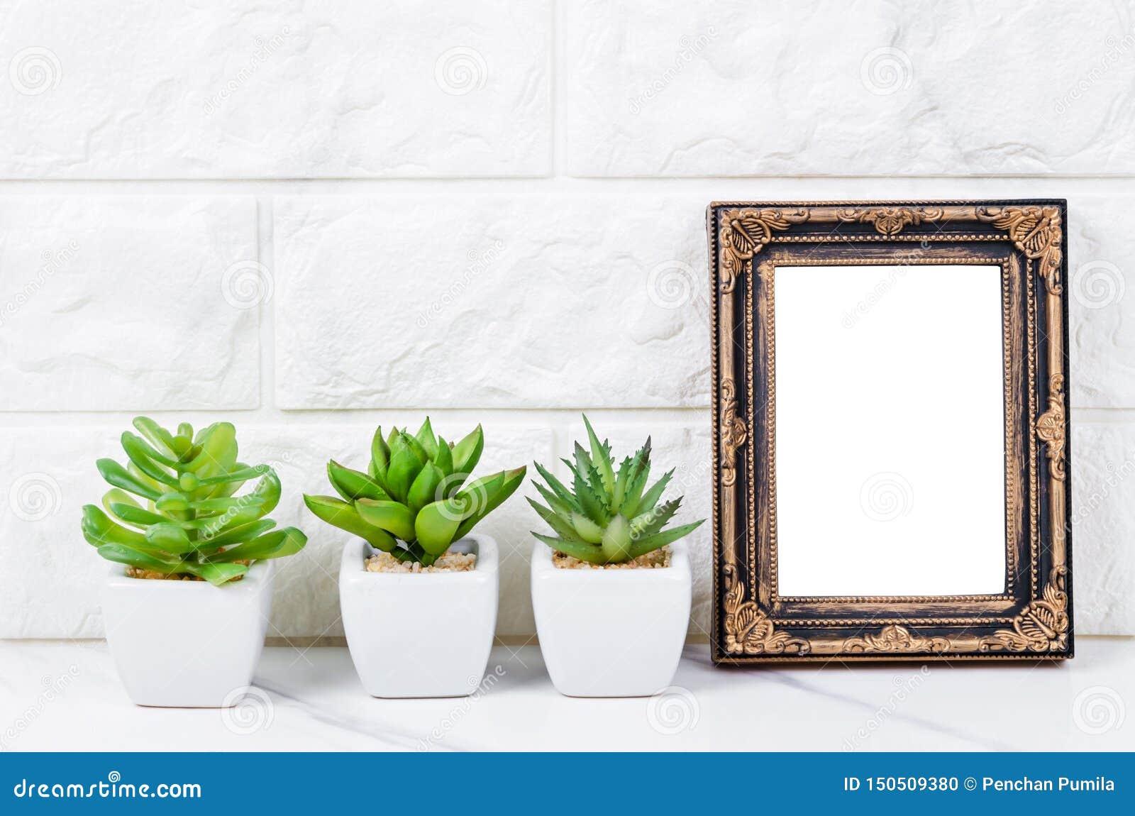 Пустая винтажная рамка фото на стене с заводом кактуса