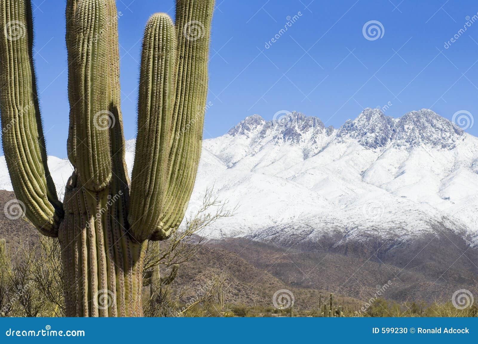 пустыня контраста