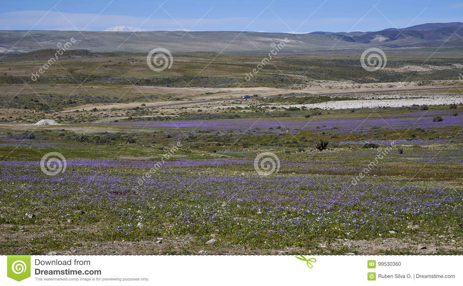 15-08-2017 пустыня Atacama, Чили Цветя пустыня 2017