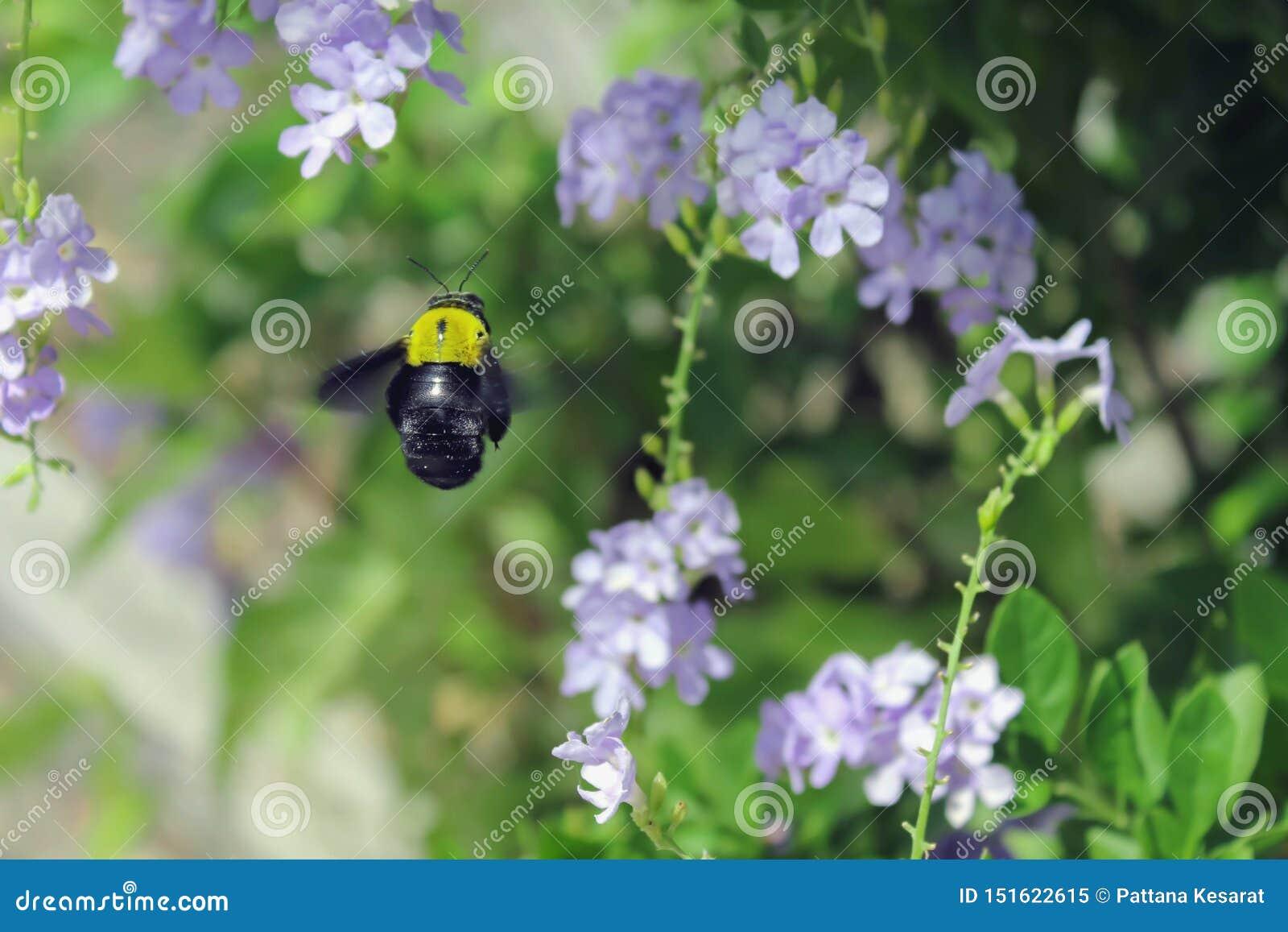 Путайте пчела летает
