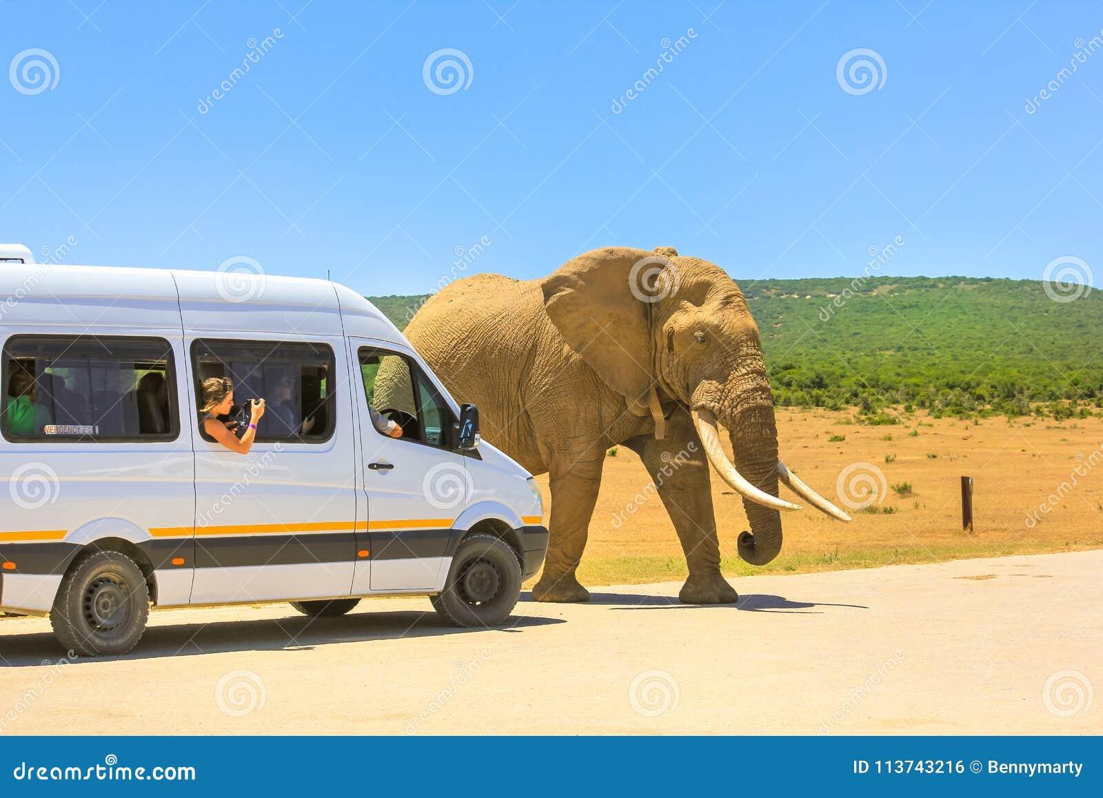 Путешествие сафари Африки