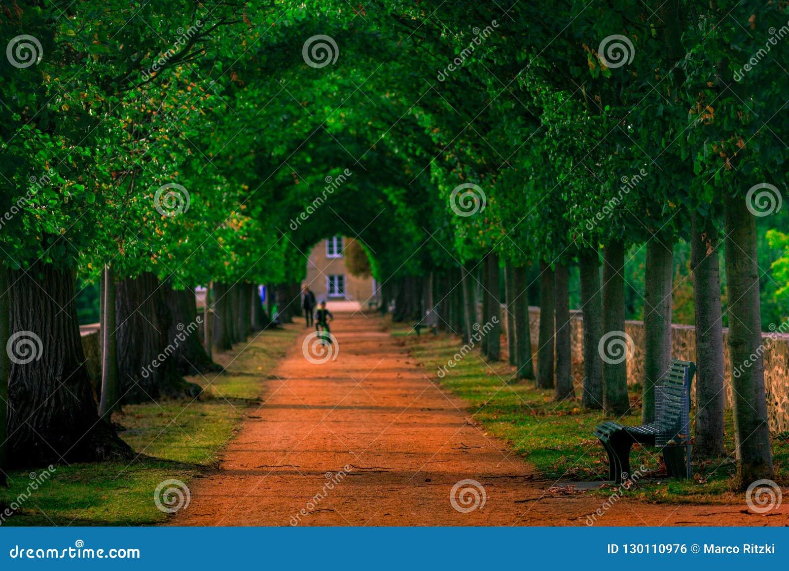 Путь в зеленый парк на день осени