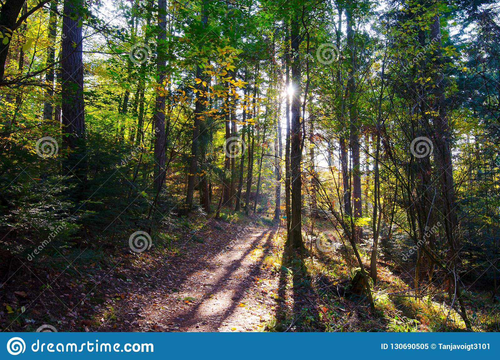 Путь в лесе гор Вогезы
