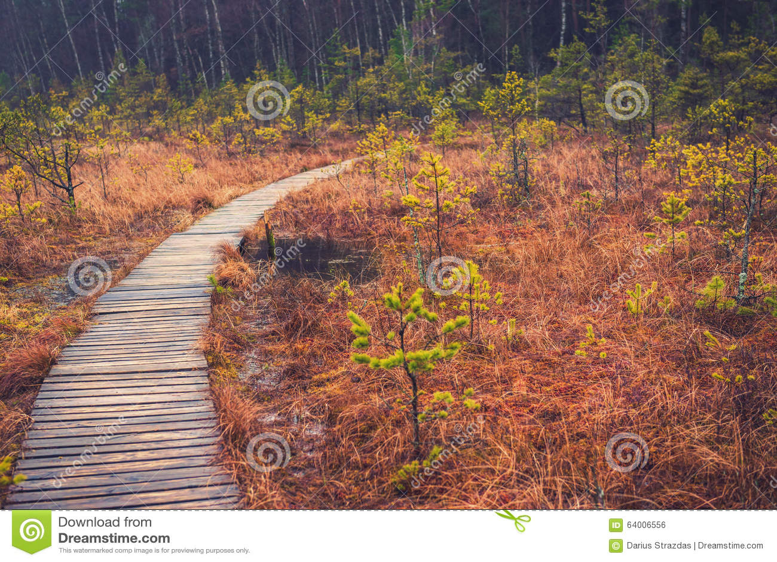 Путь в пуще