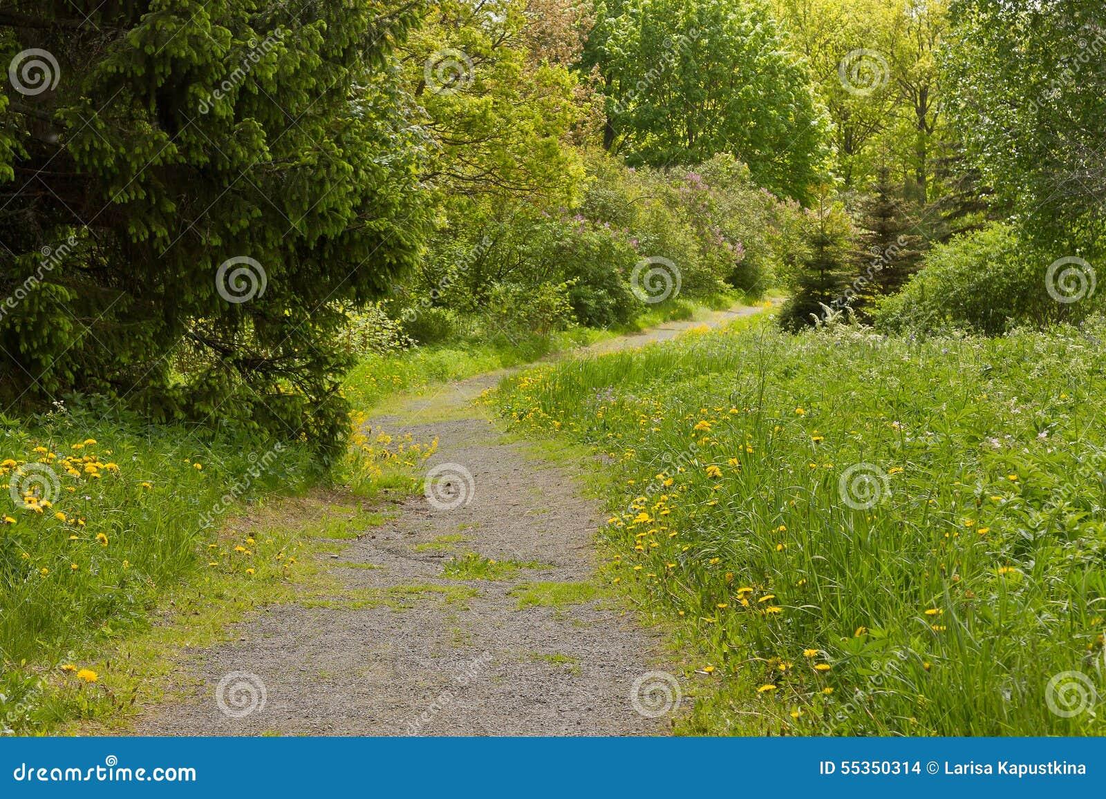 Путь в древесинах