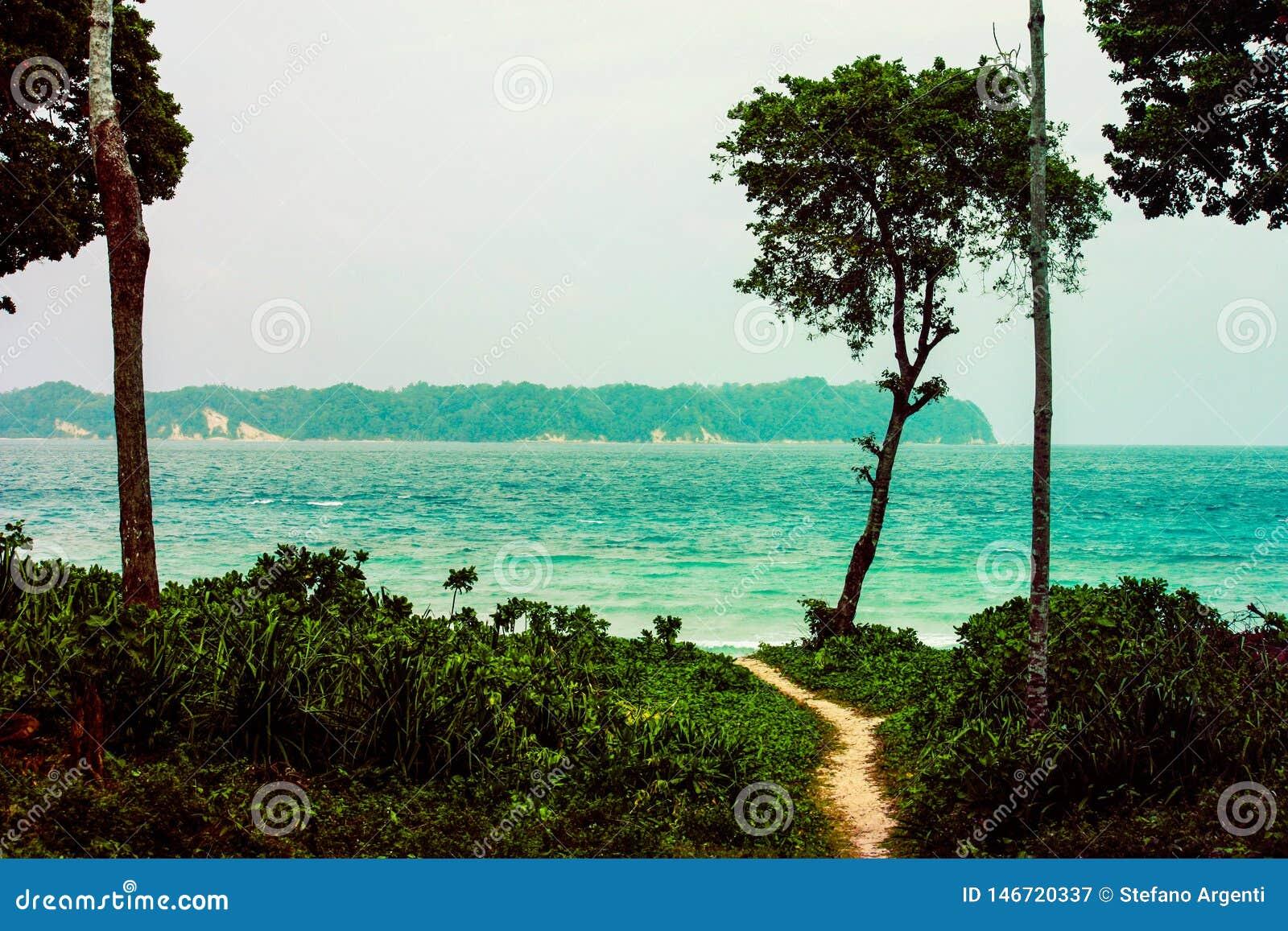 Путь в середине леса к пляжу