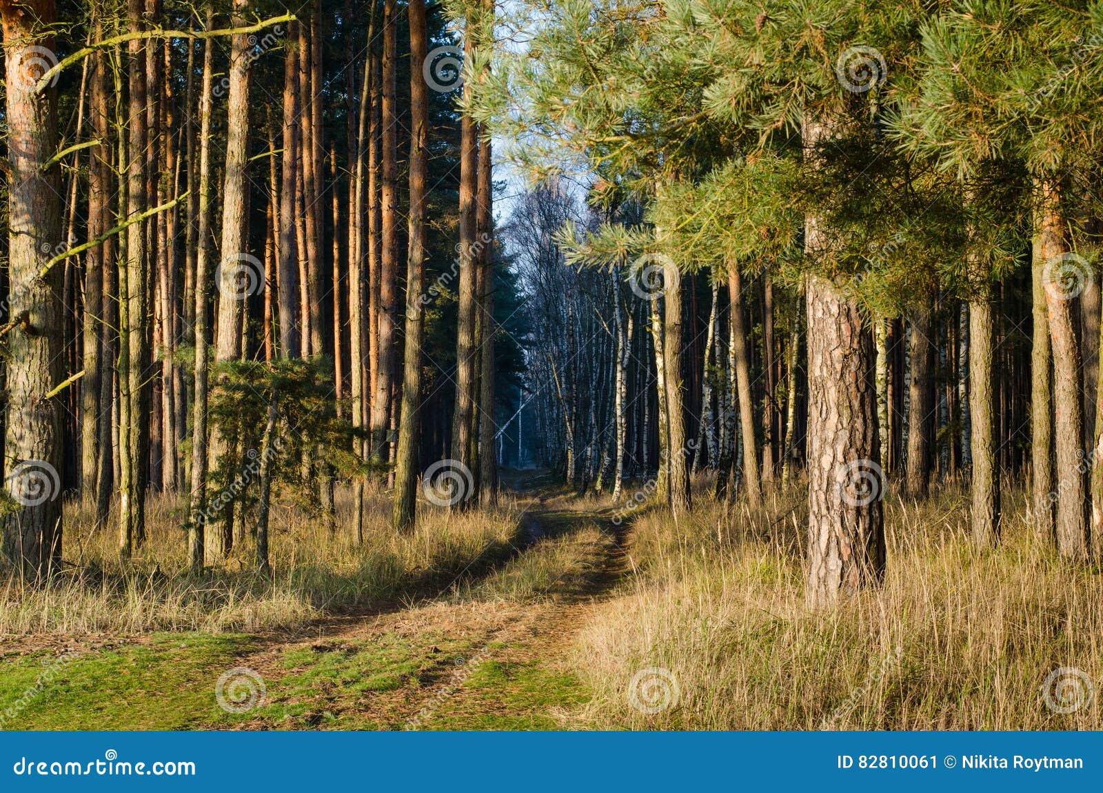 Путь в солнечный лес