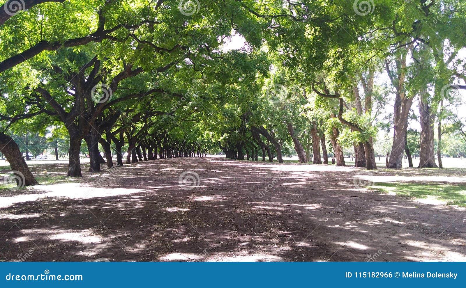 Путь между деревьями, Bosques de Палермо, Буэнос-Айрес - Argen