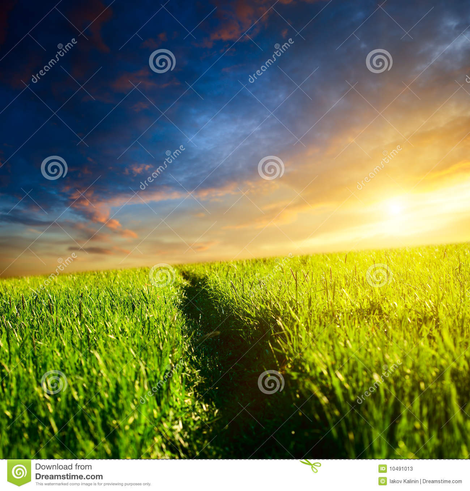 путь травы