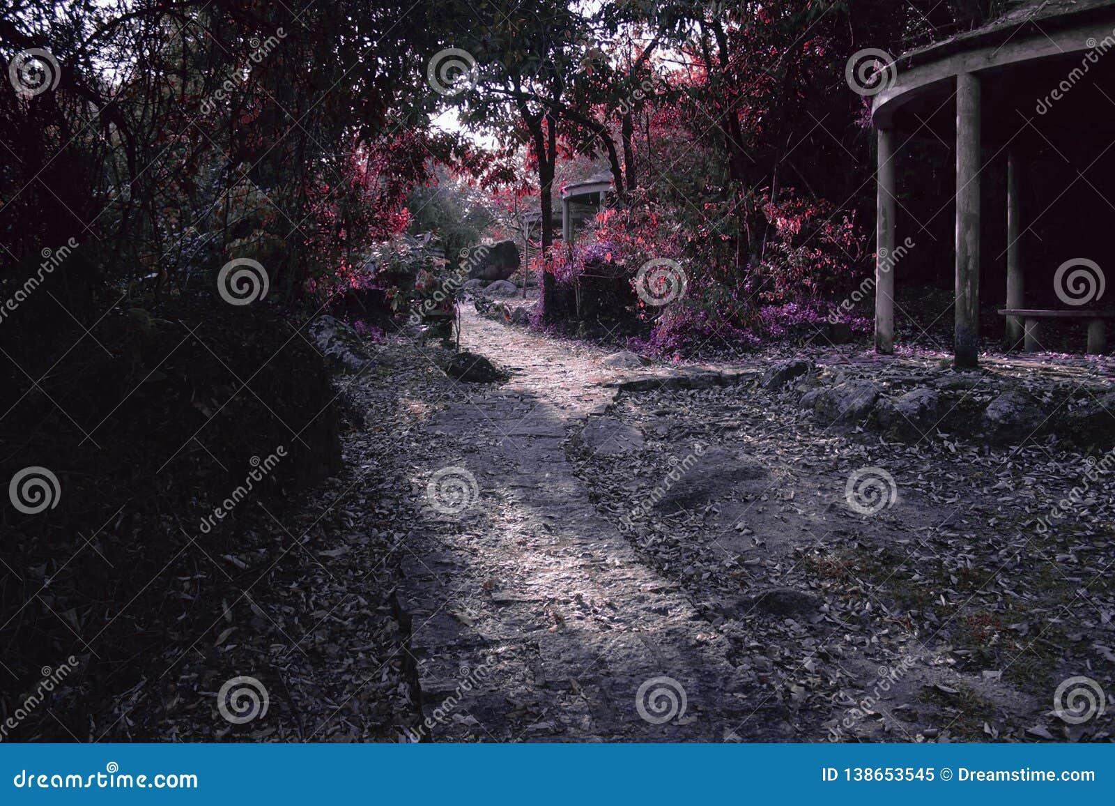 Путь феи цвета на волшебном лесе