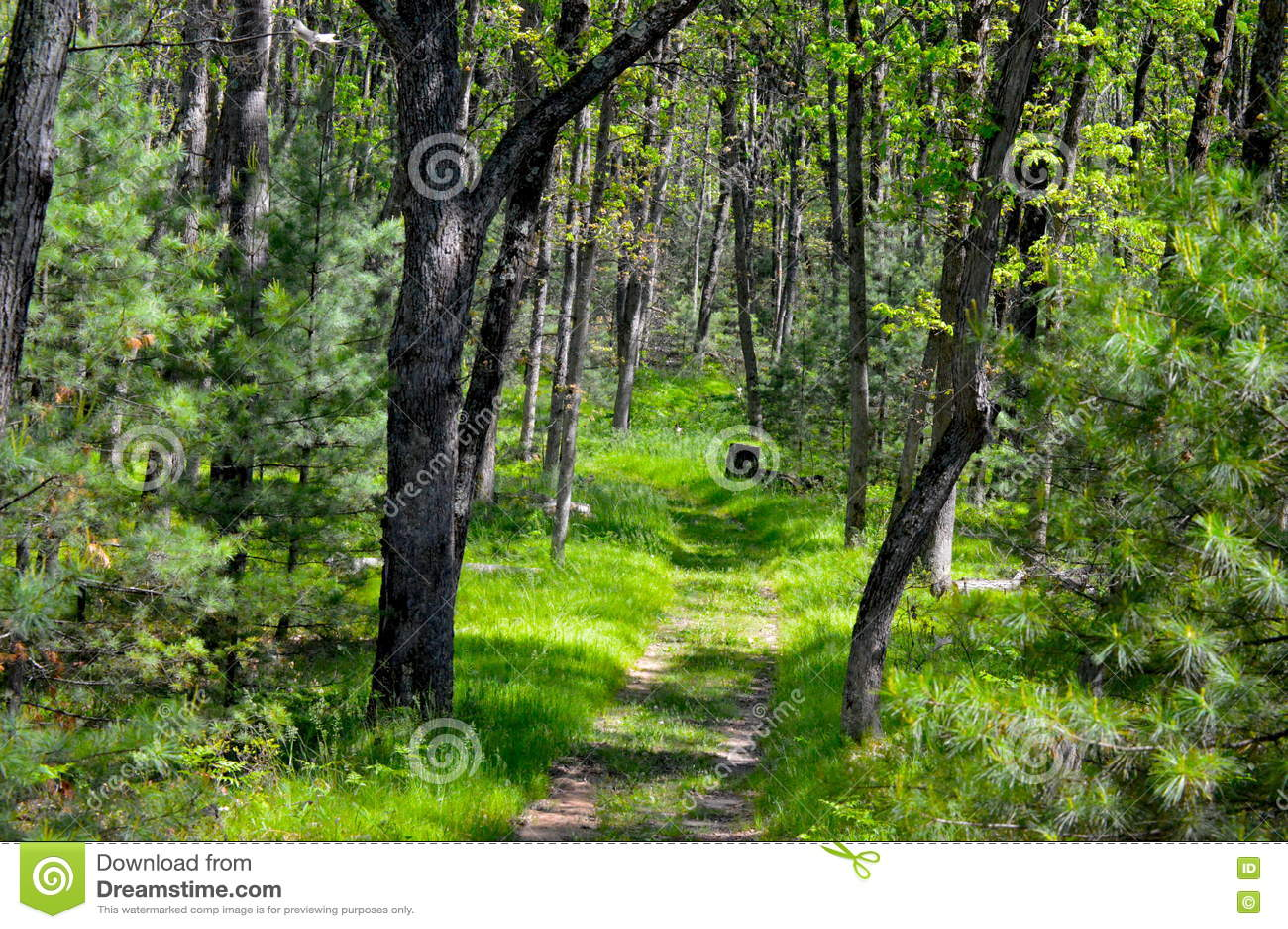 Download Путь через древесины стоковое фото. изображение насчитывающей путь - 72276906