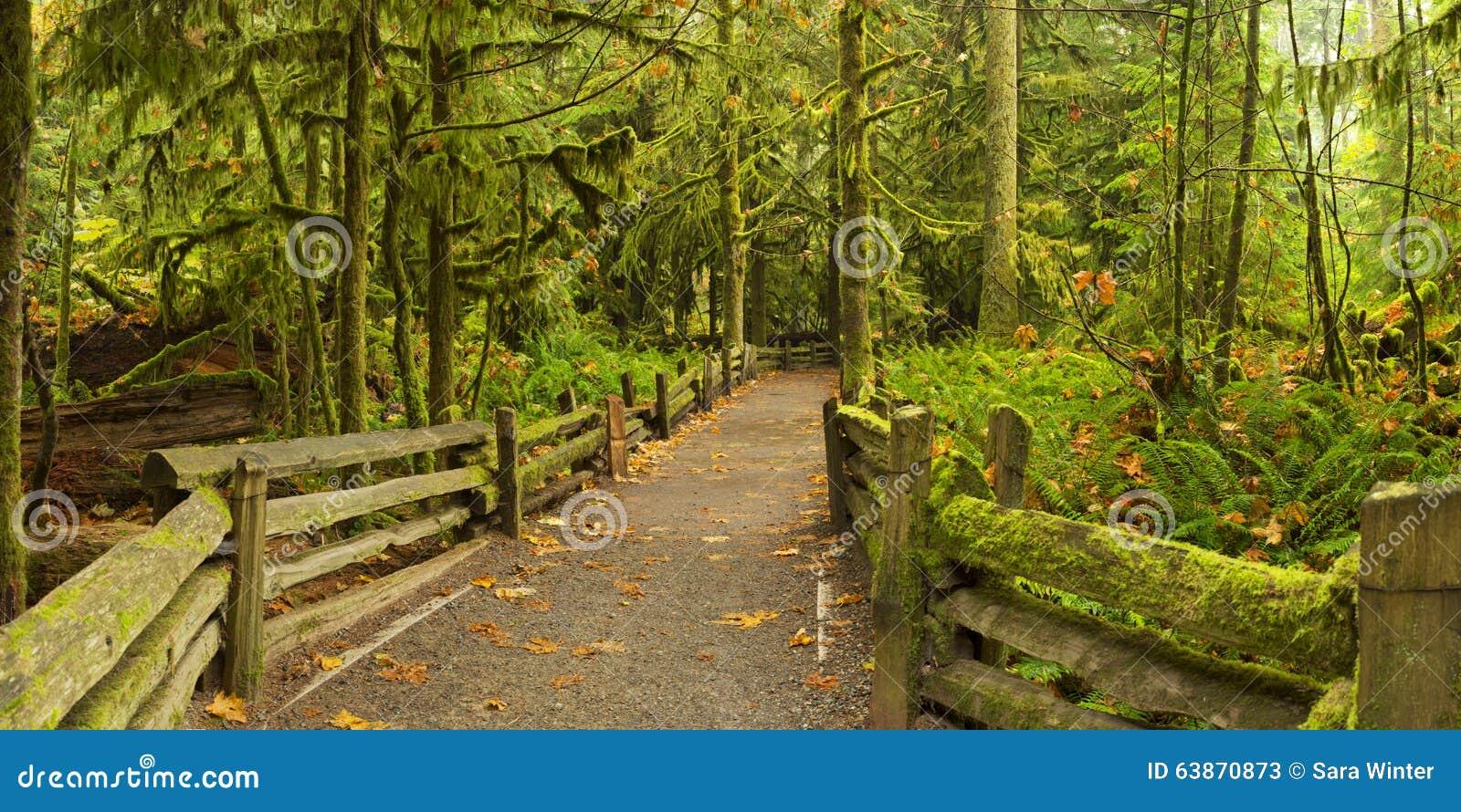 Путь через сочный тропический лес, рощу собора, Канаду