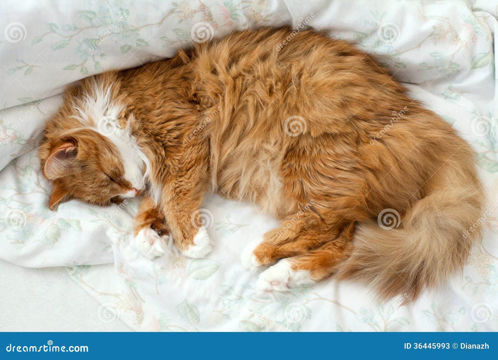 Кот на кровати.картинки