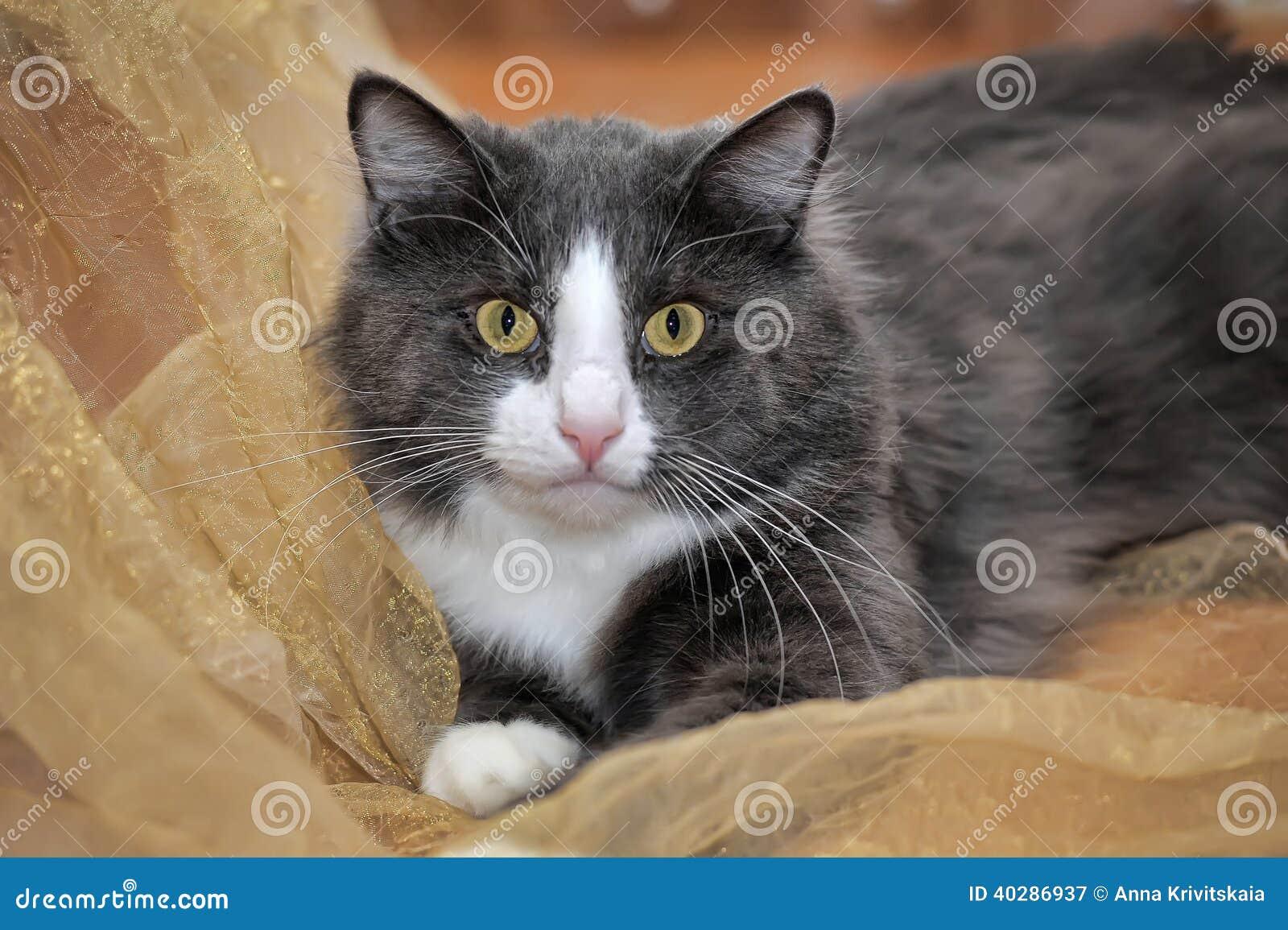 Пушистый серый и белый кот