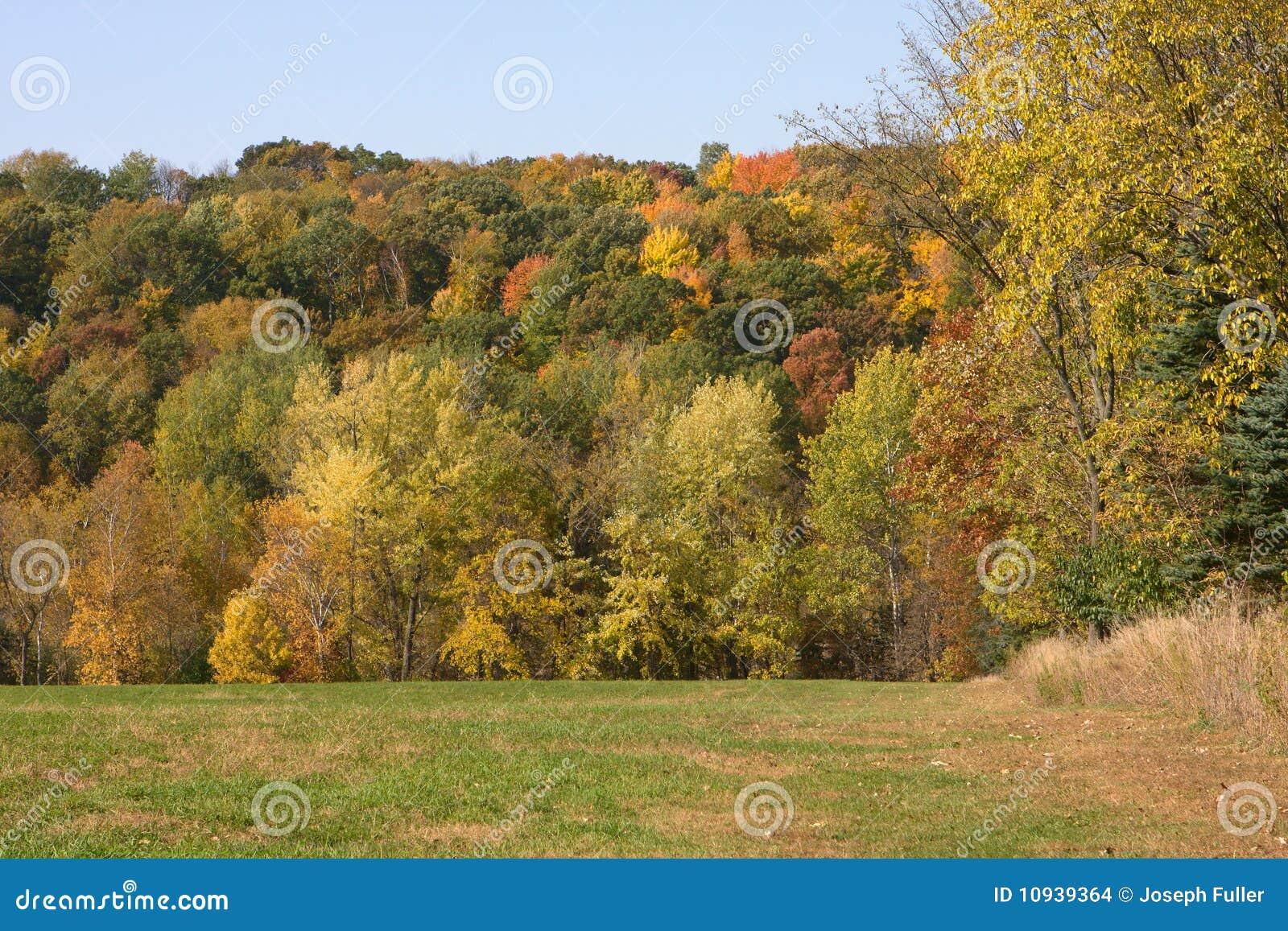 пуща листва
