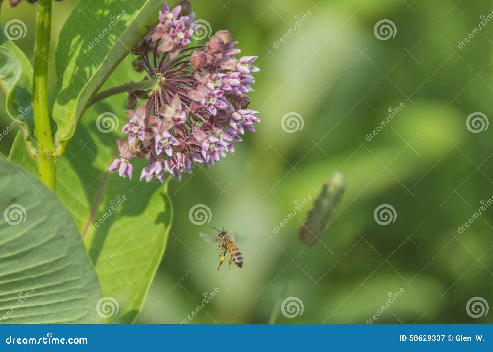 Пчела Средний-воздуха
