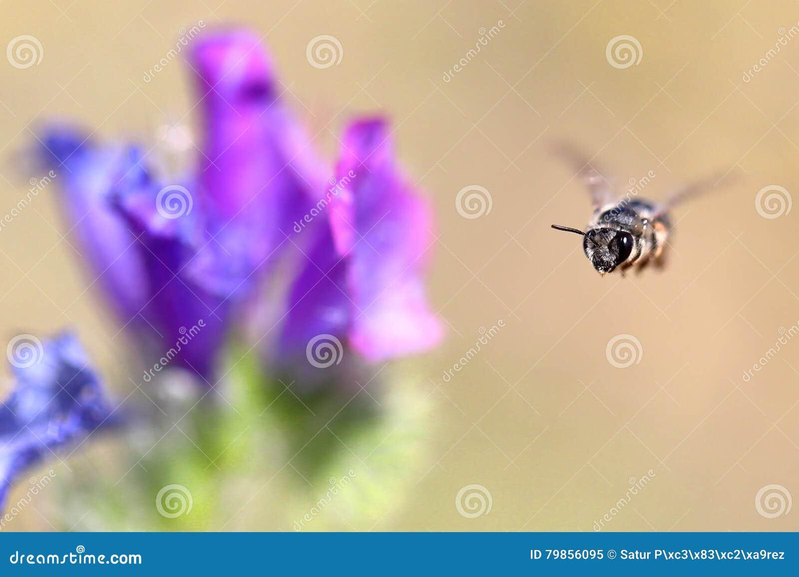 Пчела уловленная в midair