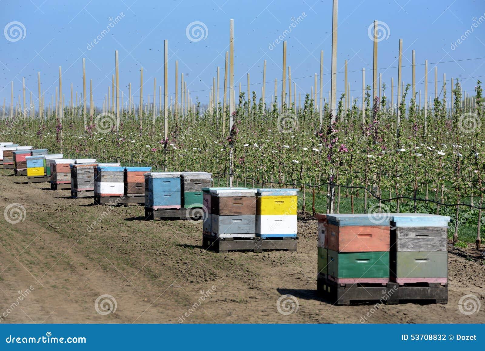 Пчеловодство в современном яблоневом саде
