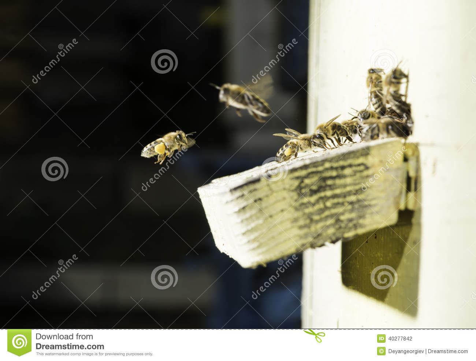 Пчелы входя в крапивницу