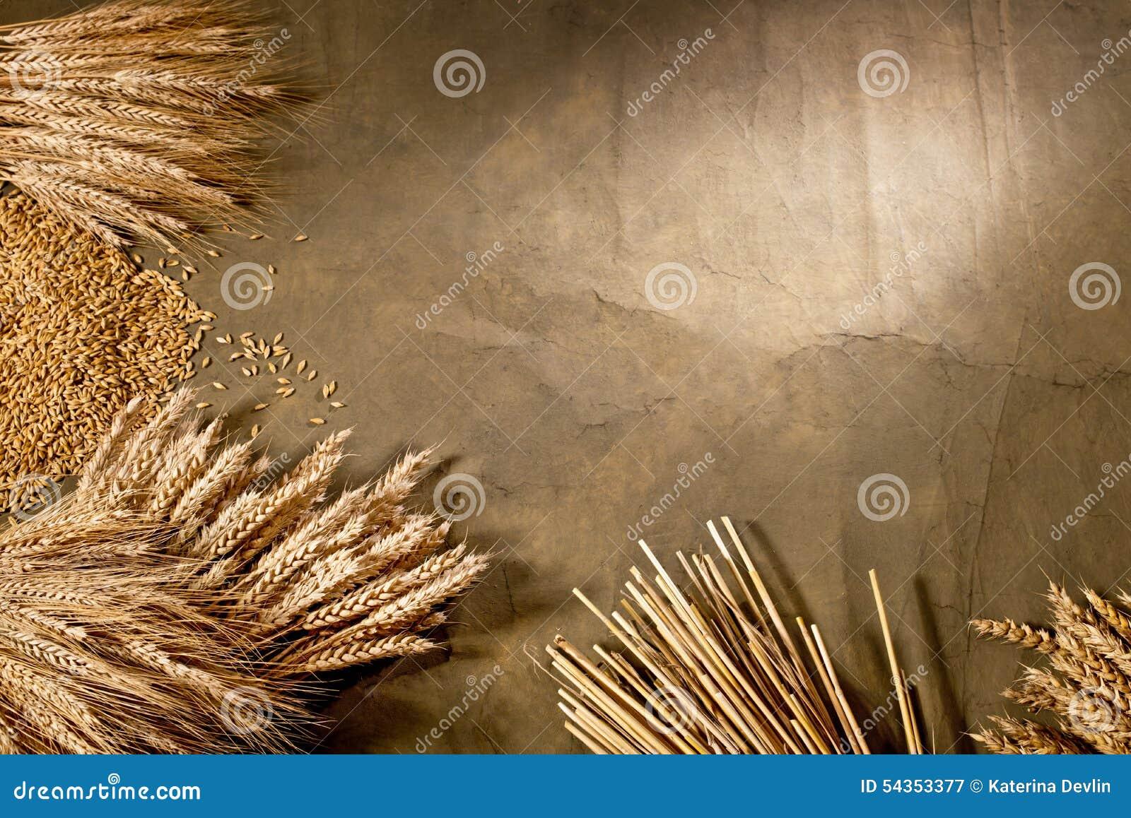 ячмень пшеница