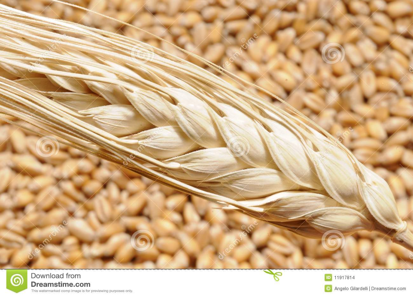 пшеница пара зерен