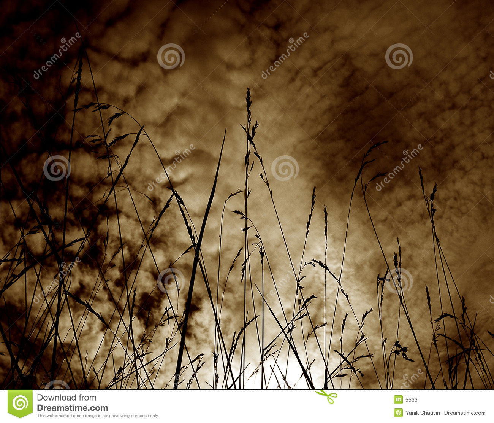 пшеница силуэта