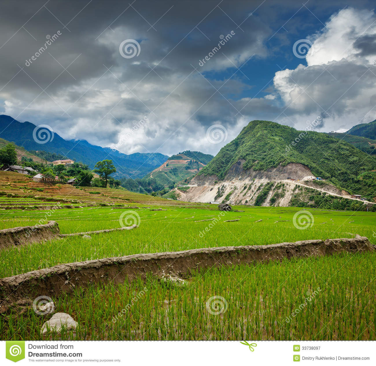 Плантации риса. Вьетнам